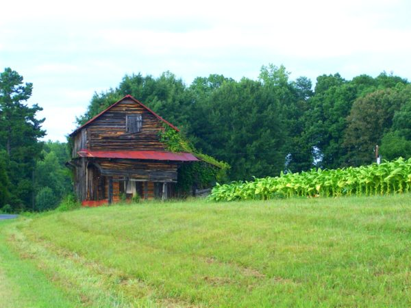 Tobacco Barn restored during the Tobacco Barn Restoration Project